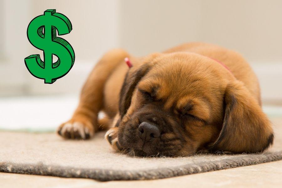 earn money whilst you sleep